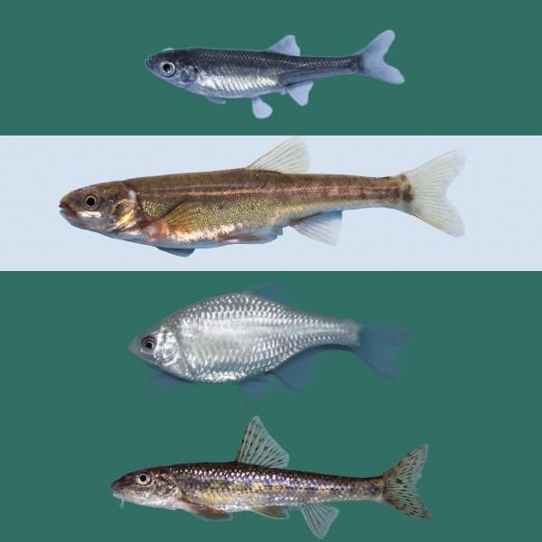 Biotopfisch Mix