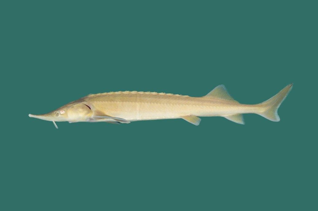 Angebote unsere koi und teichfische teichfische online for Teichfische versand