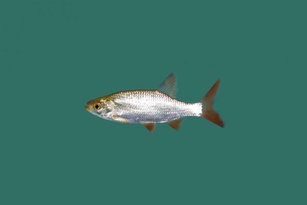 Futterfisch Mix